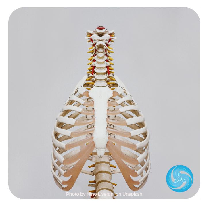 craniosacrale osteopathie köln 2